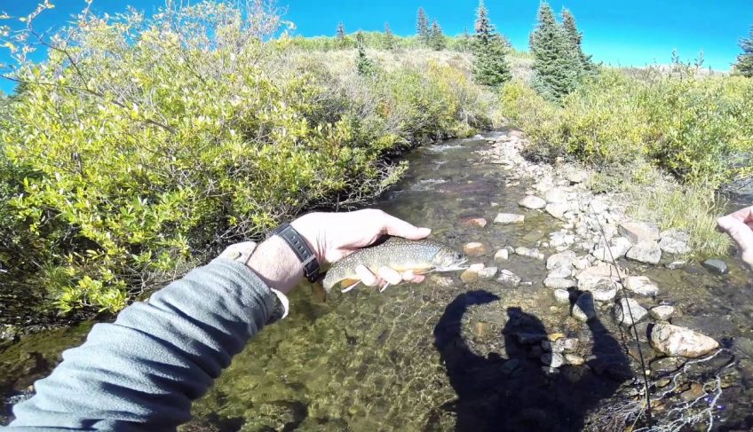 Top Ten Fishing Spot in Colorado