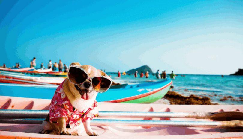 Kayaking with Dog Seats